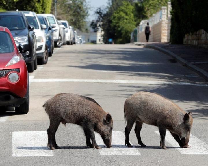 Tudósok vizsgálják, hogy hatott az állatvilágra az emberi tevékenységek szüneteltetése