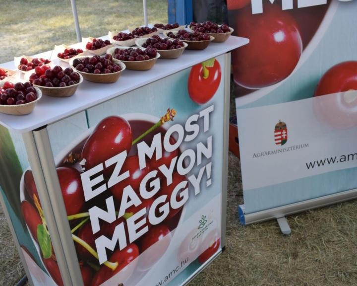 AM: jó minőségű az idei magyar meggy