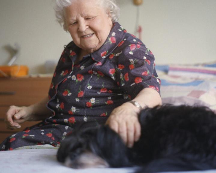 A kutyák segíthetnek az emberi demencia kutatásában
