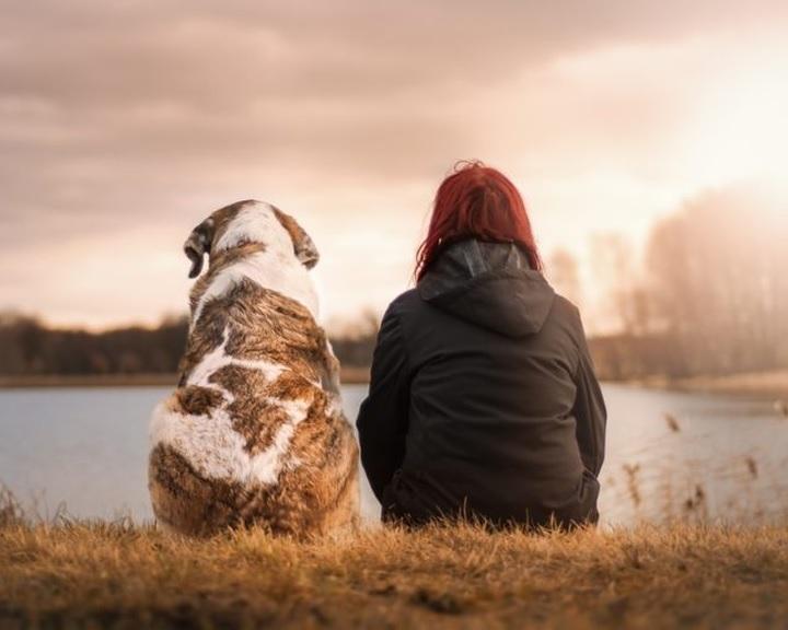 A kutyák meg tudják különböztetni az ember szándékos és véletlen tetteit