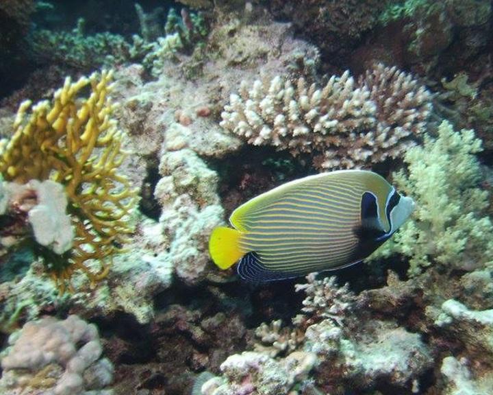 Felére csökkent a világ korallzátonnyal borított területe az 1950-es évek óta
