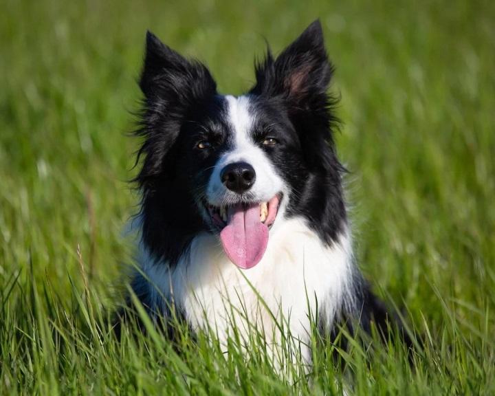 Újabb ELTE-kutatás jelent meg a szótanuló kutyákról