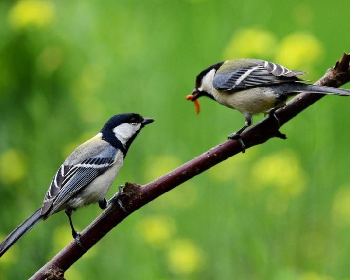 Kína egy új, a biológiai sokféleség védelmét szolgáló alapot hoz létre