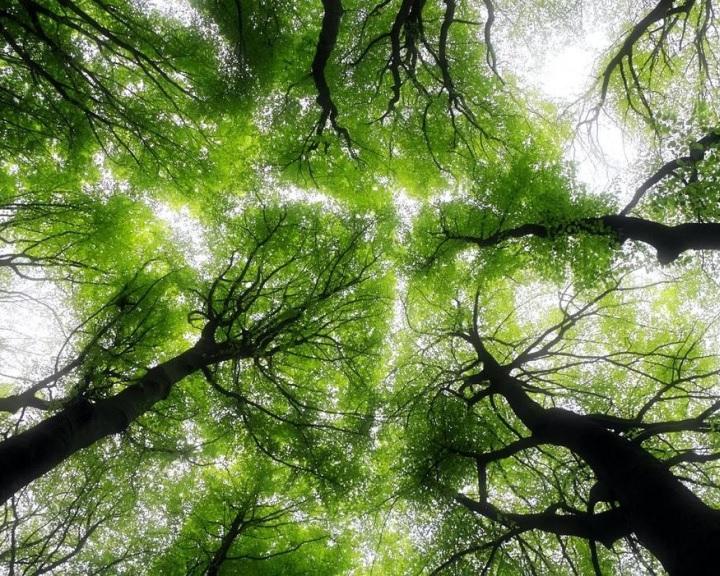 Az erdei biodiverzitás kulcsfontosságú környezeti tényezőit vizsgálták az ÖK kutatói