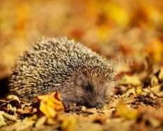 Az avar védelmet nyújt az élőlényeknek a hidegebb időben