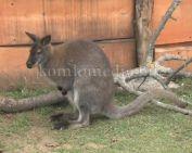Új jövevények a Mini Zoo-ban (Faragó Endre)
